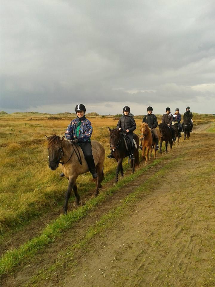 Rømø Ponyfarm