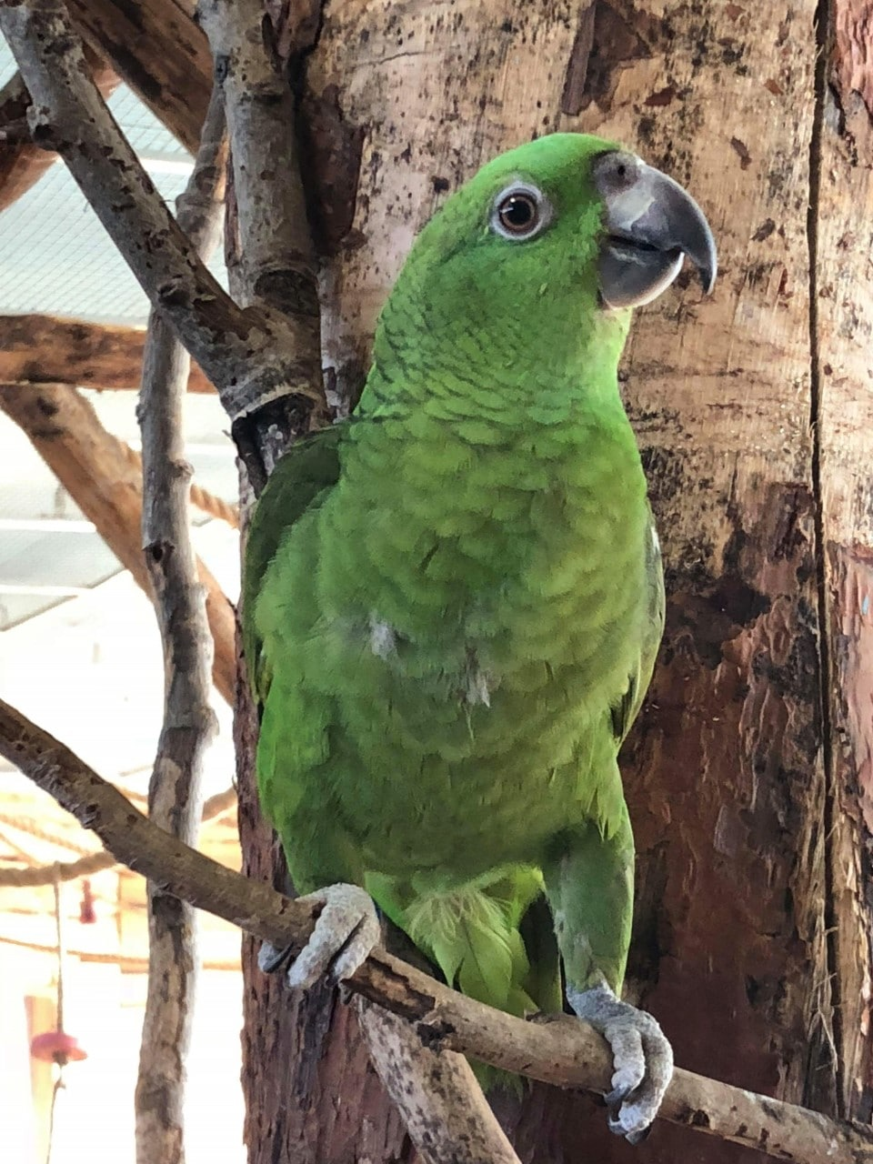 Papegøje Land
