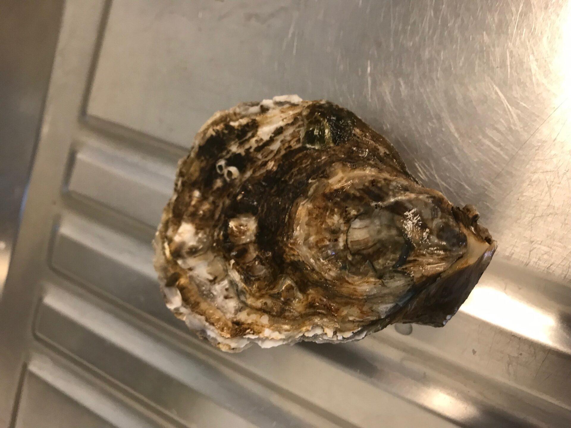 Rømø Shellfish