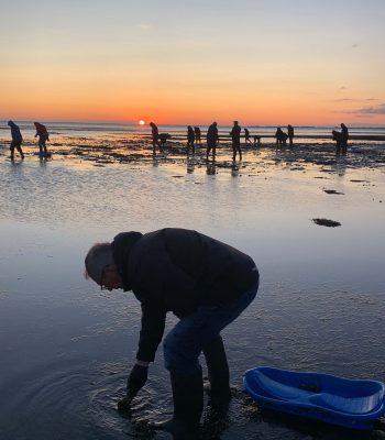 Rømø Oysters
